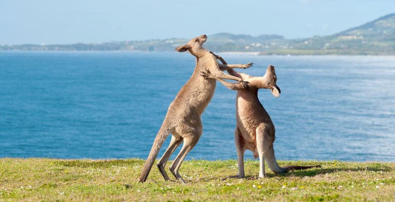 free vpn giveaway for australians