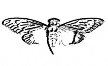 Cicada-3301