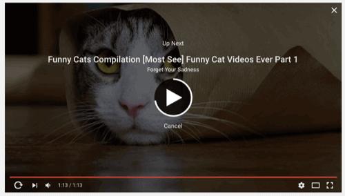 cat-video-new